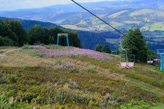 Karpatische Bergen in de zomertijd Stock Foto