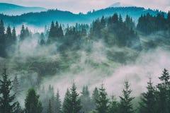 Karpatische bergvallei na de regen stock foto's