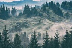 Karpatische bergvallei na de regen royalty-vrije stock foto