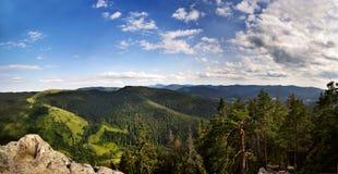 Karpaty,乌克兰绿色山在夏天 免版税库存照片
