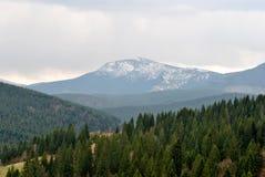 Hoverla 2061 измеряет гору в Украин, покрытом снежком. Стоковые Фото
