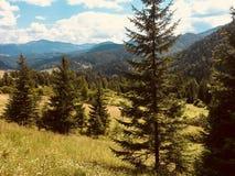 Karpaty jest malowniczymi miejsc górami w Ukraina fotografia stock