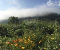 Karpaty jest malowniczymi miejsc górami w Ukraina zdjęcia royalty free