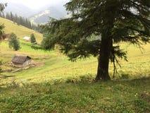 Karpaty jest malowniczymi miejsc górami w Ukraina fotografia royalty free