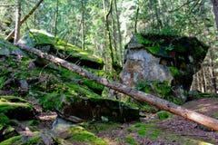 Karpaty, montagne Fotografia Stock Libera da Diritti