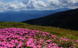 karpaty montains στοκ φωτογραφίες με δικαίωμα ελεύθερης χρήσης