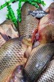 Karper verse vissen op ijs Royalty-vrije Stock Foto