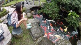 Karpfen schwimmen in einem Teich stock video footage