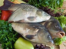 Karpfenfische lizenzfreie stockfotografie