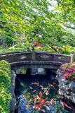 Karpfiskbad i dammet i trädgården Fotografering för Bildbyråer