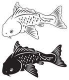 karpia rybi koi ornamental staw Obraz Stock
