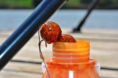 Karpiowy połowu haczyka popas Zdjęcia Royalty Free