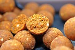 Karpiowych połowów boilies odżywczy popas Fotografia Stock