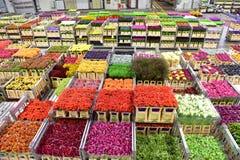 Karren van diverse verscheidenheid van bloemen die in Aalsmeer FloraHolland opvoeren Stock Foto's