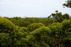 Karri Trees Images stock