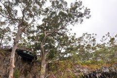 Karri Trees: Allerta della caverna del lago Immagine Stock Libera da Diritti