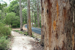 Karri Trees Boranup National Park West Australia Stock Images