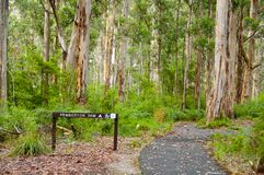 Karri Trees en parc national de Gloucester images libres de droits