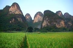 Karst et riz Image libre de droits