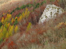 Karst forest Swabian Alps at fall Stock Images