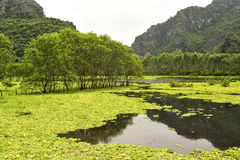 Karst formations and rice fields in Ninh Binh, Vietnam. Landscape with limestone towers and rice fields. Ninh Binh, Vietnam Stock Photography