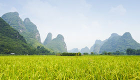 Karst landscape in China Stock Photography