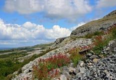 Karst-landschap gebied Burren stock foto's
