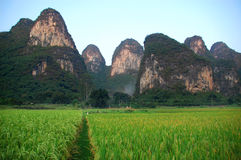 Karst and Rice Royalty Free Stock Image