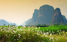 Karst scenery in Guangxi province, China. Famous karst mountain scenery in Guangxi, province (China). Flower at the foreground Royalty Free Stock Image