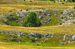 Karst sinkholes, detail from Pester plateau landscape Royalty Free Stock Image