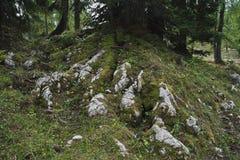 Karst vegetation Stock Photos