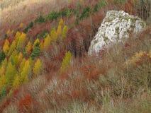 Karstskog Swabian Jura på nedgången Arkivbilder
