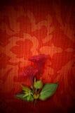 Karta czerwona pasja i kwiat, Zdjęcie Royalty Free
