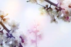 Karta dla podpis wiosny kolorów morela Obraz Stock