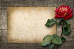 Karta dla zaproszenia lub gratulacje z czerwieni różą Fotografia Stock