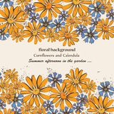 Karta z calendula i cornflowers Obraz Stock