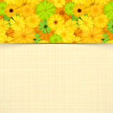Karta z koloru żółtego i zieleni gerbera kwiatami Wektor EPS-10 Zdjęcie Royalty Free