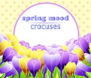 Karta z krokusami kwiat wiosny leśny white Doskonalić dla poślubiać, powitania lub zaproszenia projekta, wektor Zdjęcia Stock