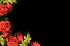 Karte der roten Rosen Stockbilder