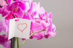 Karte mit dem Hand gezeichneten Herzen gebunden an der Orchideen-Anlage Stockbilder