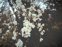 Karte mit Frühlingsblüte Lizenzfreies Stockbild