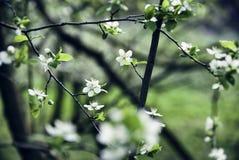 Karte mit Frühlingsblüte Stockfotos