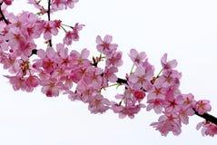 Karte mit Frühlingsblüte stockfoto
