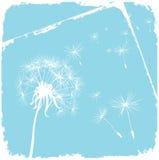 Karte mit Löwenzahn und blauem Hintergrund Lizenzfreie Stockfotografie