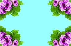 Karte mit lila Farben Stockfotos