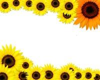 Karte mit Platz für Text und Sonnenblumen Stockfoto