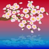 Karte mit stilisierten Kirschblütenblumen Lizenzfreies Stockfoto