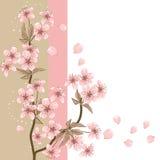 Karte mit stilisierter Vektorkirschblüte Stockfotos