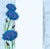 Kartka z pozdrowieniami, błękitni cornflowers Obraz Royalty Free