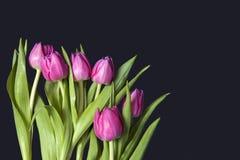 Kartka z pozdrowieniami dla walentynki ` s dnia karciany dzień powitania s valentine Osiem czarnych tulipanów na błękitnym tle Fotografia Royalty Free